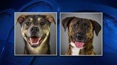 Humane Society of North Texas Hosts Free Adoptions Friday