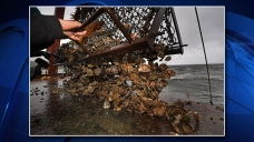 $3.5M Man-Made Oyster Reef to Be Built in Galveston Bay