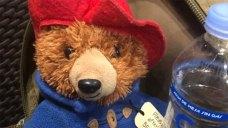 Fort Worth Family Needs Help Finding Missing Paddington Bear