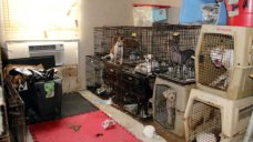 More Than 100 Animals Seized From Collin County House