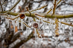 North Texas Ice Storm, Feb. 21
