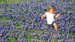 Bluebonnets in Bloom 2013 - Gallery VI