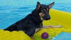 Dog Days of Summer - Gallery III
