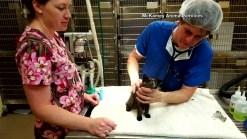 Kitten Rescued From Under Car Hood