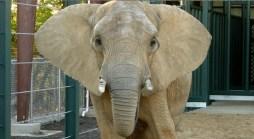 Jenny The Elephant Meets New Friend