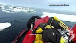 Penguin Jumps on Board Boat
