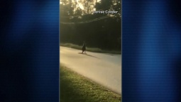 Runaway Kangaroo Spotted in Florida Neighborhood