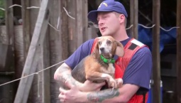 Dogs Rescued from Flood Waters
