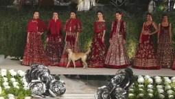 Stray Dog Steals Fashion Show