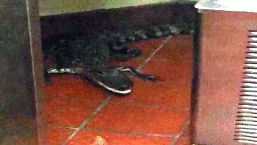 Man Throws Live Alligator Into Wendy's Drive-Thru