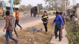 Elephant Rampages Through Indian Town