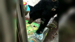 Bear Hangs Out on Back Porch