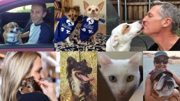 NBC 5 & Telemundo 39 Share Pet Love Stories