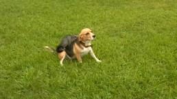 Dog and Possum Form Special Friendship