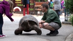 German Tortoises Make Their Way To Summer Home
