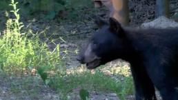 Baltimore Highways Taking Toll on Bears