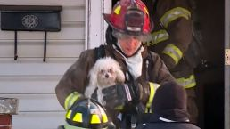 Pets Rescued From Burning Building