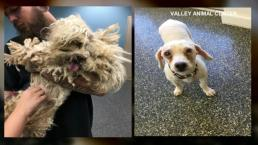 Pounds of Fur Removed from Neglected Pup