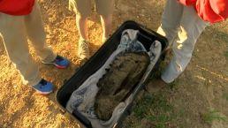 Boys Unearth Mastodon Bones