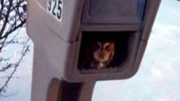 Baby Owl Found in Mailbox