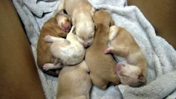 Kayaker Rescues Puppies Dumped in River