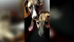 Puppies Lost in Flight