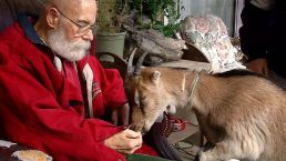 Service Goat Gets Stamp of Approval