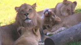 Zoo Prepares for Solar Eclipse