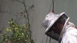 OC Woman Stung Hundreds of Times by Massive Bee Swarm
