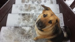 Your Snow Photos - February 26, 2015
