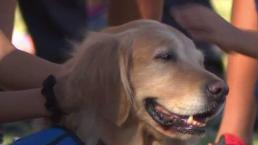 Therapy Dogs Help Community Cope After Mass Shooting