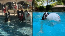 Dog Days of Summer - Conrad Crew & TJ