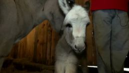 Therapy Donkeys Help Seniors And Children