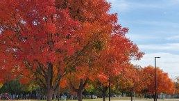 Fall Foliage in North Texas 2019