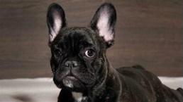 'Late Night': Extreme Dog Shaming