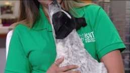 Pet of the Week: Zillow