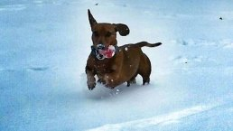 Pets in Snow - February 27, 2015