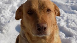 Pets in the Snow - March 5, 2015