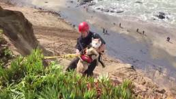 Dog Rescued From Cliff