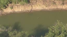 Animal Cools Off in the Trinity River