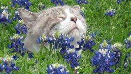 Bluebonnet Photos