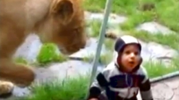 Lion Swipes at 1-Year-Old Boy