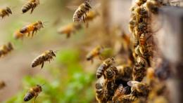 Bees Sting Texas Man About 1,000 Times