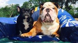 Dog Days of Summer - Gallery V