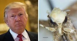 Scientist Names New Moth Species After Donald Trump