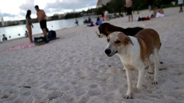 Guam Struggles to Deal With Island's 25,000 Stray Dogs