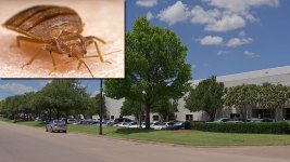Bed Bugs Infest Government Office That Deals With Disasters