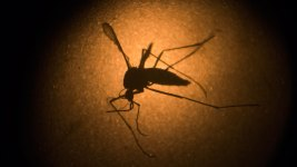 WHO Releases New Guidelines on Zika Virus