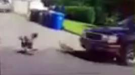 Teens Mowed Down Geese With SUV, Posted Video to Snapchat: SPCA