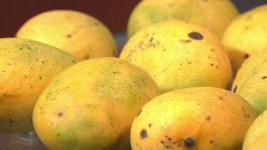 Police: Florida Man, 88, Burns Raccoon Over Eating Mangoes
